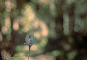 Sergio Camporota - fotografia - flower
